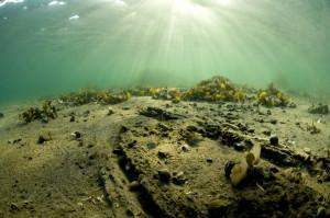I  mudderet i det indre havneområdet ligger er svært godt bevart klinkbygget   middelalderfartøy datert til 1395. Skipet var opprinnelig ca. 22 m langt. De øverste bordgangene er tatt av pælemarken. Det er nå ca. 18 m langt og 6 m bredt. (Foto Rudolf Svendsen)
